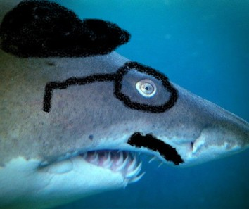 cropped-shark-in-disguise.jpg