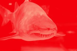 Shark Face Neon